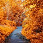 autumn-foliage